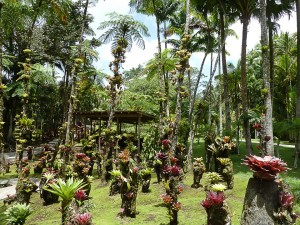 GreetingsfromRaf-Martinique-Jardins de Balata-LR
