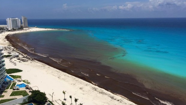 Is There Seaweed in the Riviera Maya? No More Sargassum!