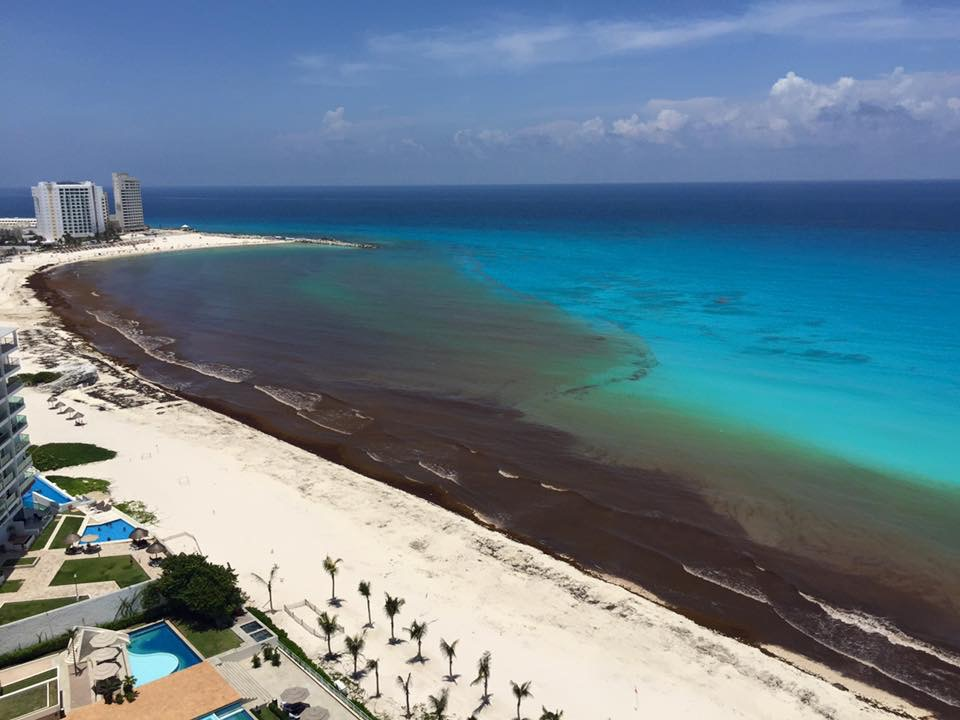 Sargassum seaweed in the Mayan Riviera and the Caribbean