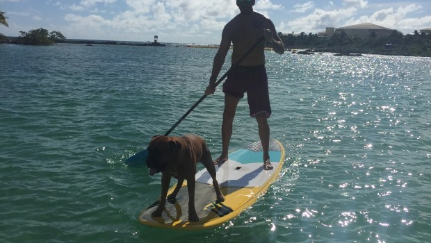 Paddle board in Playa del Carmen