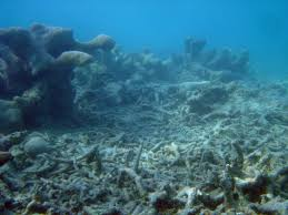 The coral barrier in DANGER