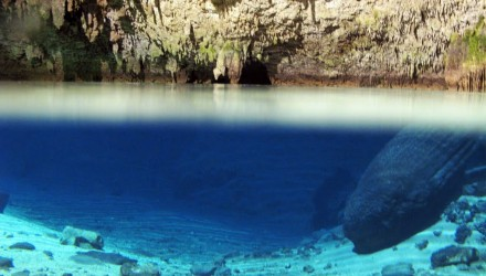 Total Cenotes Snorkeling